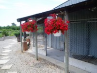 Sideview of our Kennels